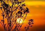 sunset-203188_150